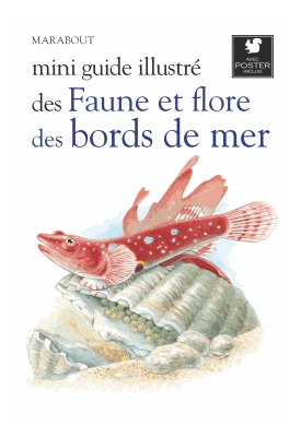 Mini guide illustré des faunes et flore des bords de mer